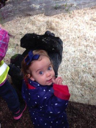 Prager Zoo: maria com os gorilas