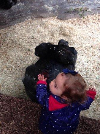 Prager Zoo: maria com os gorilas!