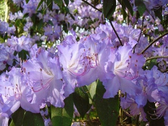 Westonbirt Arboretum : Beautiful nature