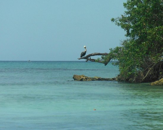 Bayahibe SUP (Stand Up Paddle Boarding): Pelicano