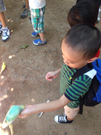 Zoobic Safari: My 4- year old boy feeding the birds :)