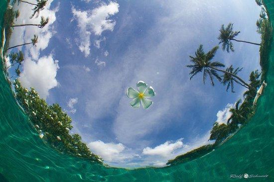Duangjitt Resort & Spa: Unterwasseraufnahme