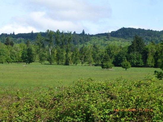 Row River Trail : Trail Scenery