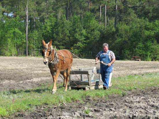 L.W.Paul Living History Farm: Plowing the field