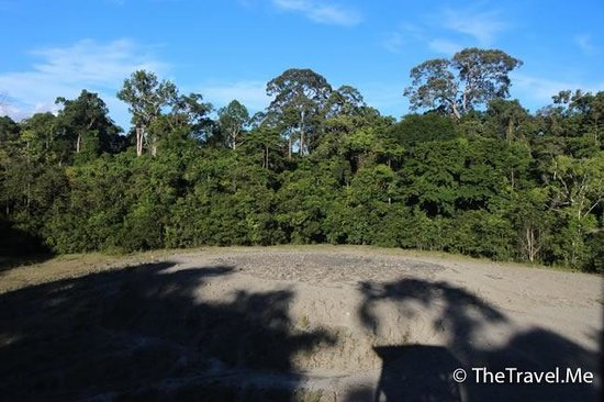 Tabin Wildlife Reserve: 塔繽保護區的活泥火山