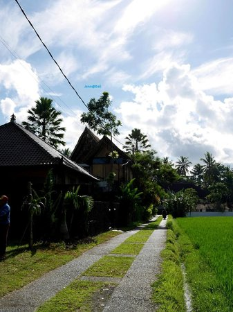 Junjungan Ubud Hotel and Spa: Across the street