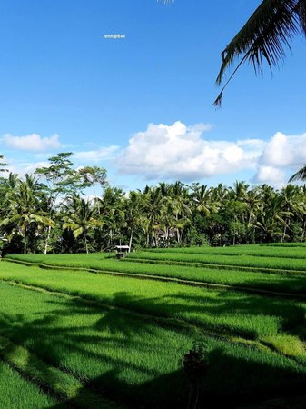Junjungan Ubud Hotel and Spa: Good for your eyes