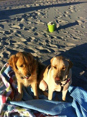 Engleside Inn: Beach doggies