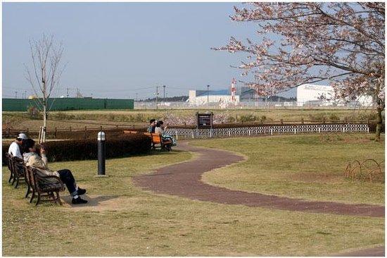 Sanrizuka Sakura no Oka: 公園内