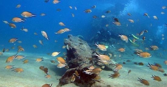 Atlantis Diving Lanzarote: Fish