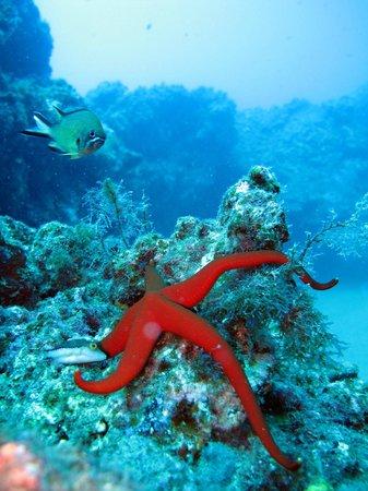Atlantis Diving Lanzarote: SeaStar fish