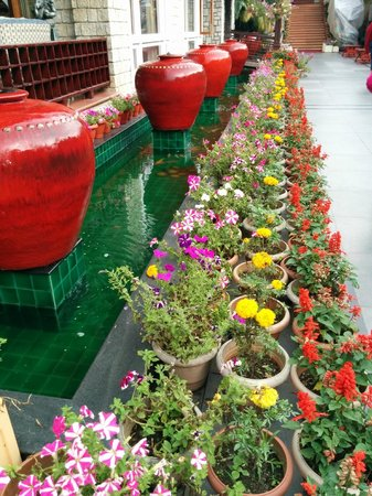 Mayfair Spa Resort & Casino : beautiful flowers