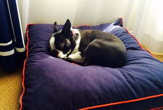 Sheraton Bellevue : Now THIS is a dog friendly hotel, says Pedro-the-Boston!
