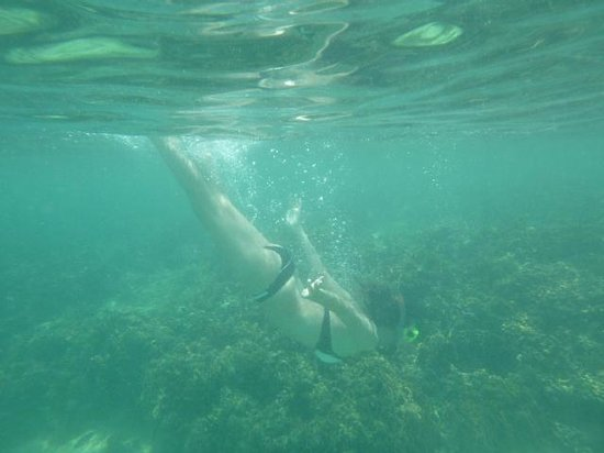 Xplora Panama Day Tours: Gorgeous snorkeling on the Caribbean side of Panama