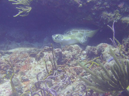 Dive Adventures : Turtle on Proselyte Reef
