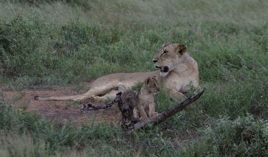 Thomas Tours & Safaris - Private Day Tours : Tsavo est
