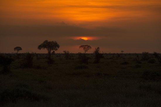 Thomas Tours & Safaris - Private Day Tours: Tsavo est