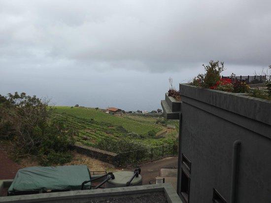 Tours In Tenerife: Bodegas Monje winery vineyards