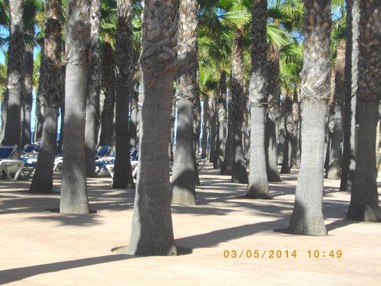 Marbella Playa Hotel: palmeraie