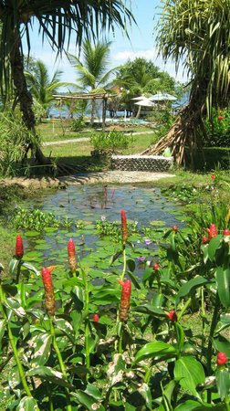 Dolphin Bay Hideaway : The garden