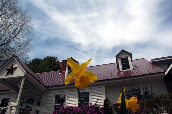 Buttonwood Inn on Mount Surprise: Keep looking up.