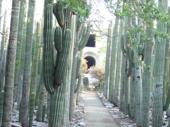 Ethnobotanical Garden: View down the garden