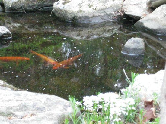 At Cumberland Falls Bed and Breakfast Inn: Koi pond
