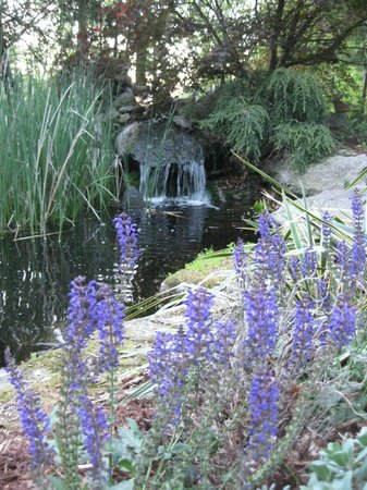 At Cumberland Falls Bed and Breakfast Inn: Water feature in back Yard