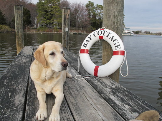 Bay Cottage Bed & Breakfast : Beau, Assistant Innkeeper of Bay Cottage, St. Michaels, MD