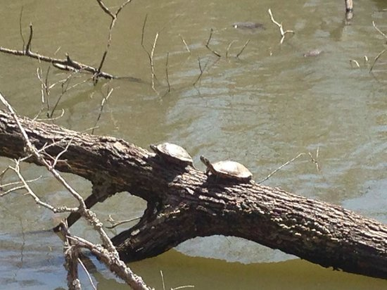 Brown County State Park : Turtles
