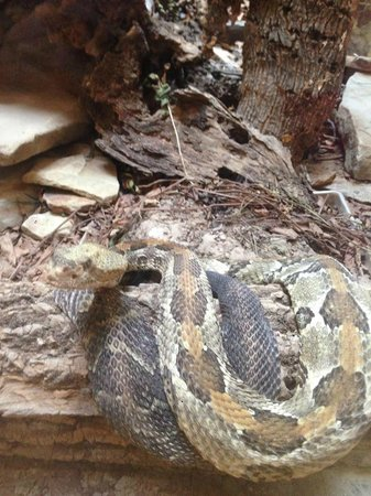 Brown County State Park: Rattlesnake