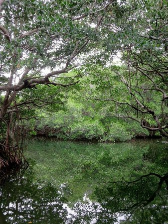 Capt. Sterling's Everglades Tour: In the mangroves
