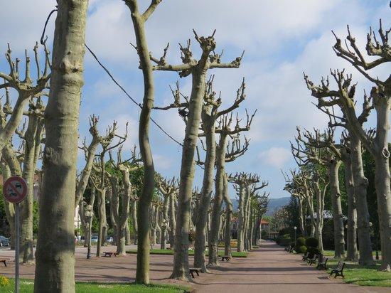 La Villa De Mazamet: interesting trees in park