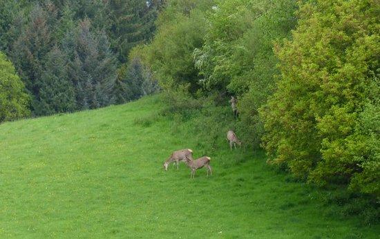 Damson Dene Hotel: Deer in Adjoining Field