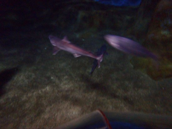 National Aquarium: exotic fish and shark