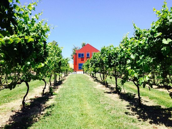 Kiwiesque : View from the vines