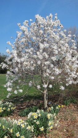Tyler Arboretum: Ahh, Spring