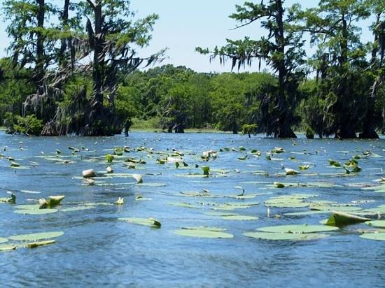 Cajun Country Swamp Tours: views of the swamp.