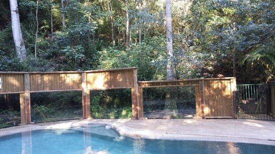 Treetops Montville: Pool