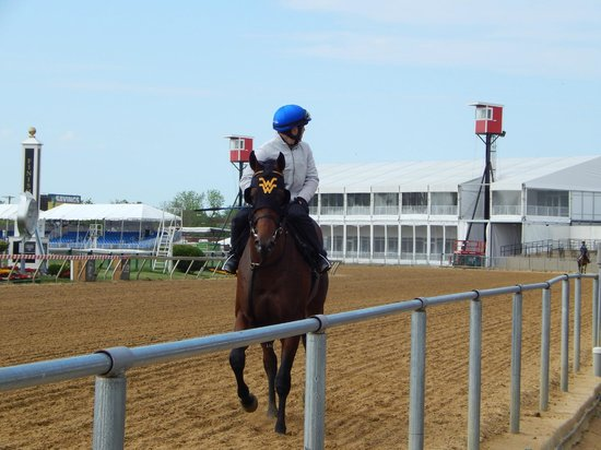 Pimlico Race Course: exercising on the track
