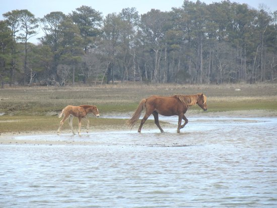 Daisey's Island Cruises : We were so excited to see this pony and her foal