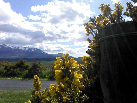 Heart of Scotland Tours: The beautifully wicked gorse