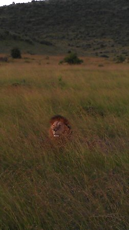 Keekorok Lodge-Sun Africa Hotels : Male With Pride