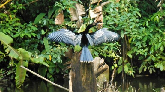 Pachira Lodge: Cannot remember the same of this bird