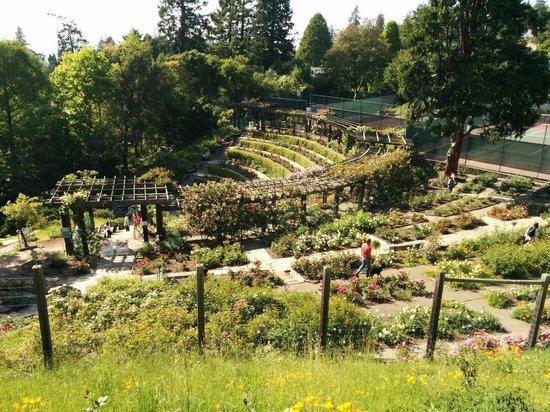 View of Golden Gate Bridge Berkeley Municipal Rose Garden
