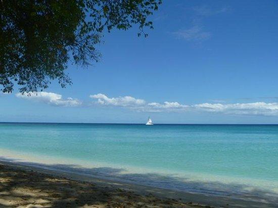 Gibbes Beach: Under the nice shade(morning)