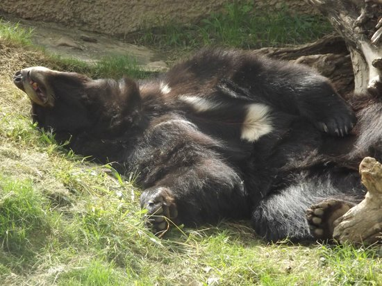 California Area Living Museum (CALM): bear