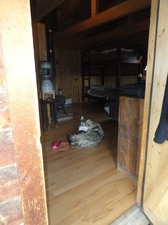 Boulder Mountain Guest Ranch: Yutah  hangin out in cabin #1
