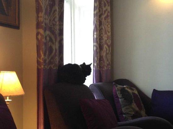 Harlingford Hotel: ラウンジにいるネコのジジ。