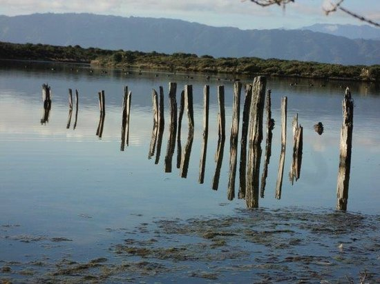 Kapiti Island Nature Tours: Remnants of an old pier in the lagoon, Kapiti Island